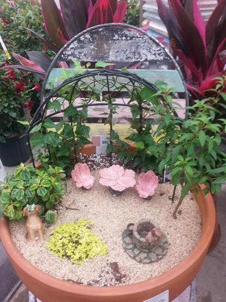 Fairy Garden Plants And Planters   K U0026 S Greenhouse